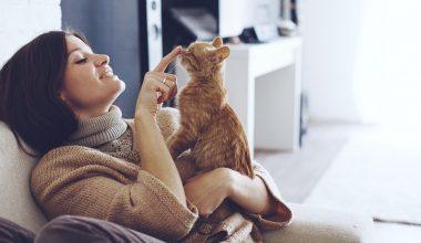 Pet Craft Activities and Ideas dabit praeter Pyrrhonem